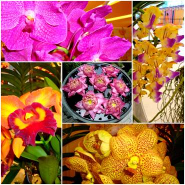 Bob Stirrup, quarante ans de passion pour ses orchidées